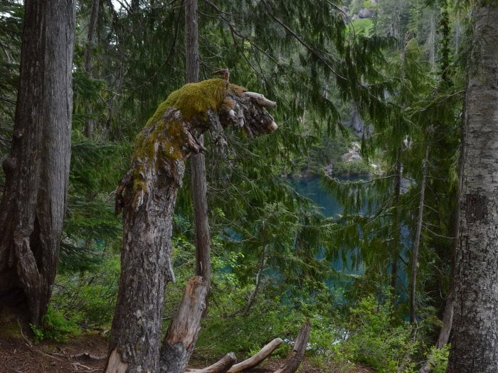 Conifer forests a Lake Serene, near Seattle USA