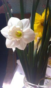 Pretty daffodils in a vase
