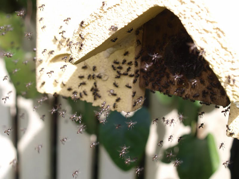 One of our native beehive colonies