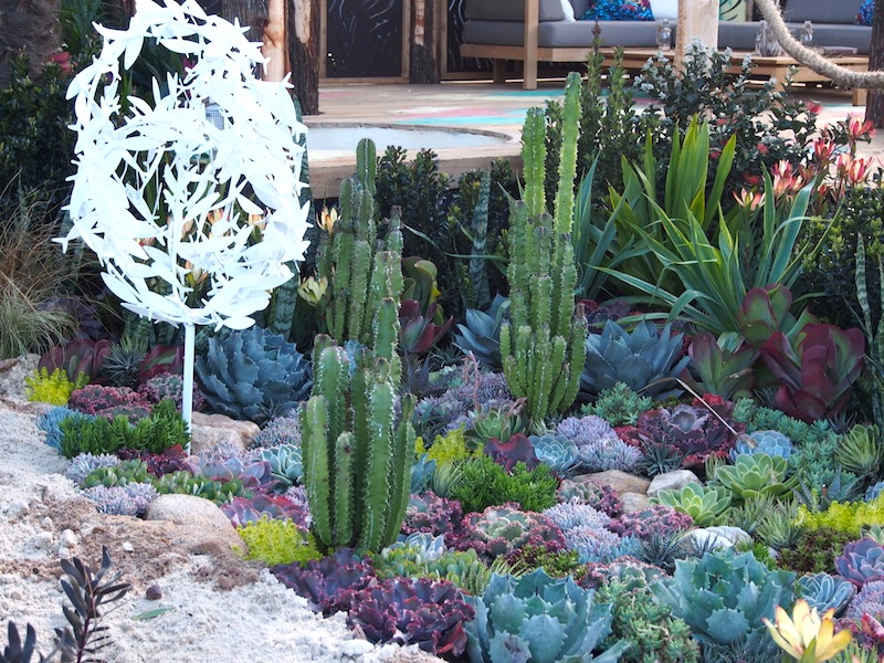 Succulent Garden Designs Excellent Succulent Bed Variegated Agave