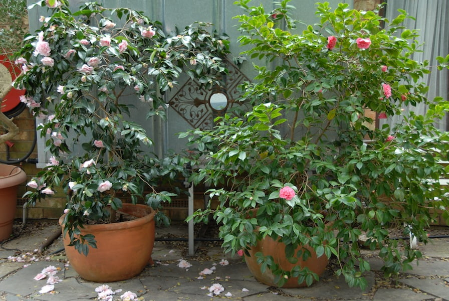 how to grow plants in large pots term gardendrum