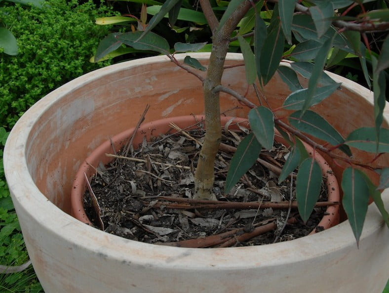 You can hide a cheaper plastic pot inside a nice one