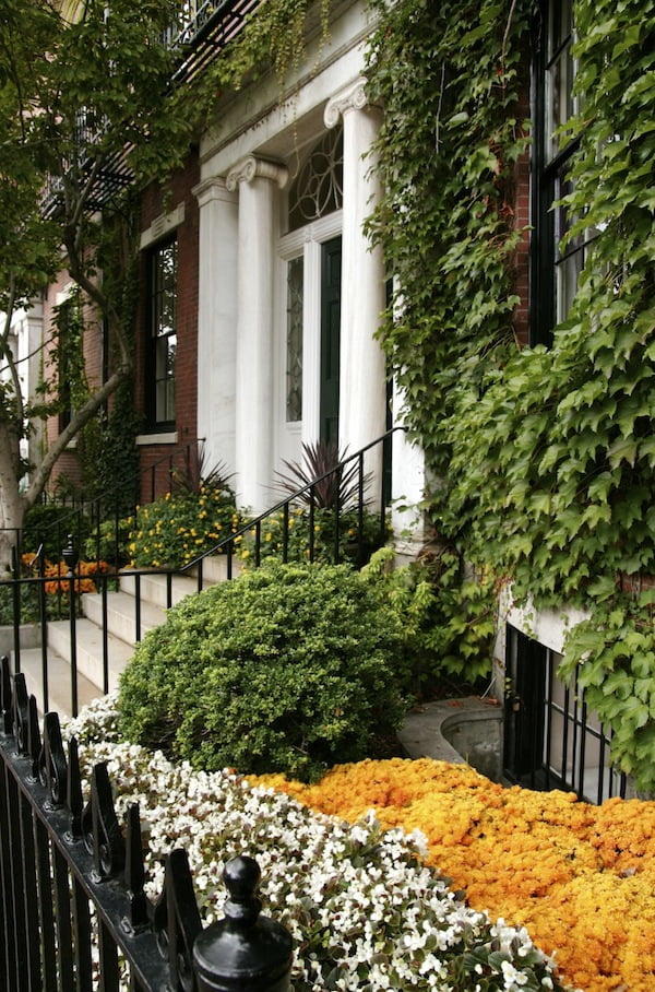 Perfect plants and maintenance enhance this Boston terrace