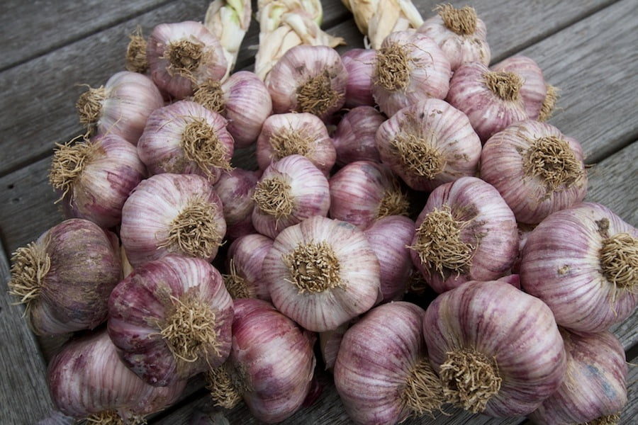 Plaited garlic. From 'Garlic' by Penny Woodward