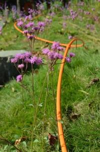 Imaginary line in my garden