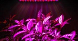 pink grow lights
