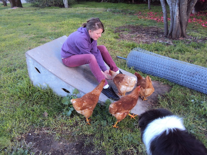 With the chickens (and Danny the dog)