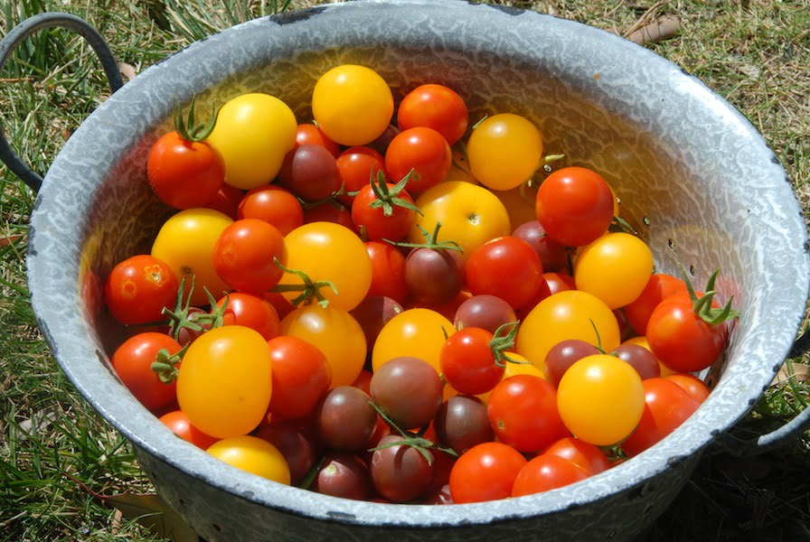 I had a larger harvest in 2012 with different varieties and better soil preparation