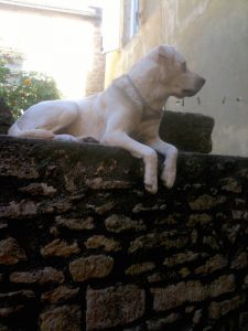 Dogs like to get up high to watch their territory