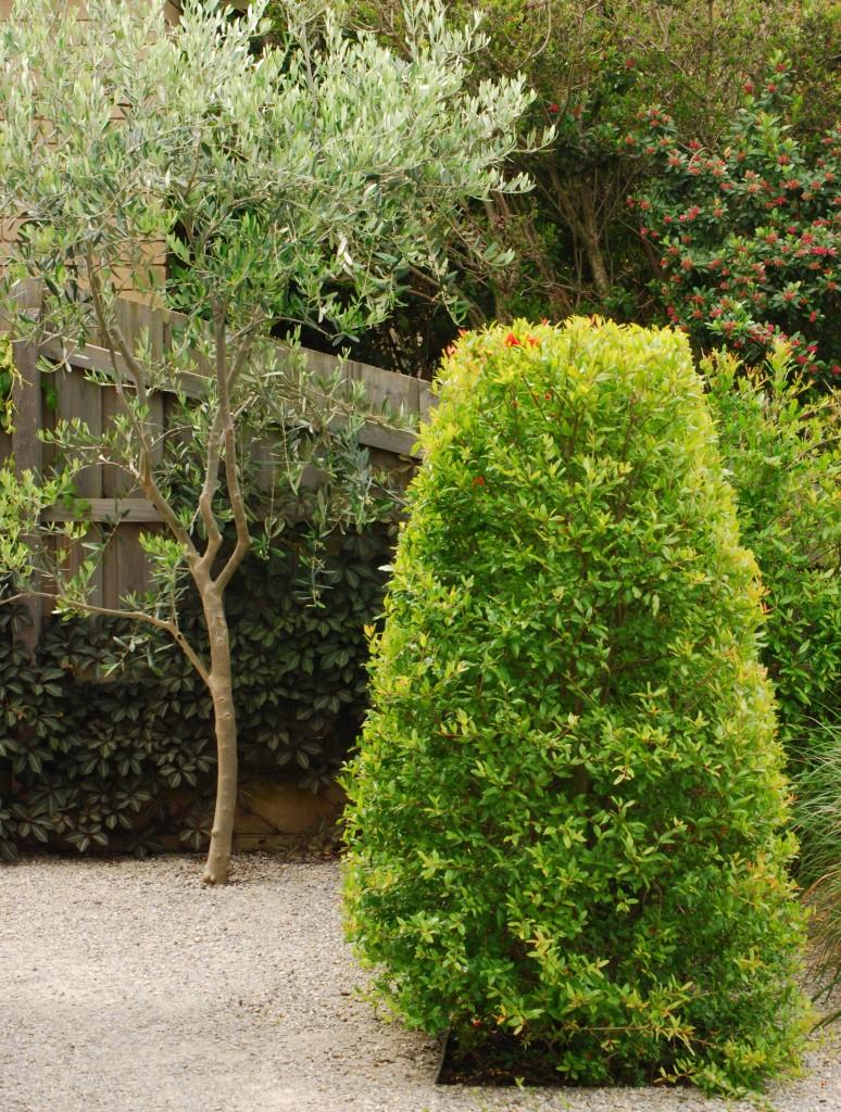 Melbourne DesignFest 2014 garden. Garden design by Stephen Read. Pomegranate hedge
