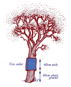 Recommended tree collar from DEPI Victoria
