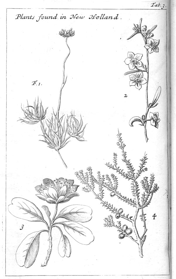 """Drawings of plants found in New Holland, from Dampier's """"A Voyage to New Holland"""". Drawing by William Dampier (Princeton University Library, Rare Books Division) [Public domain], via Wikimedia Commons"""