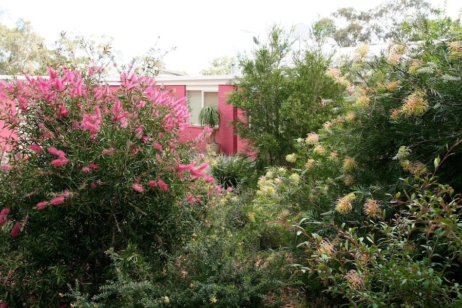 Australian native plants garden