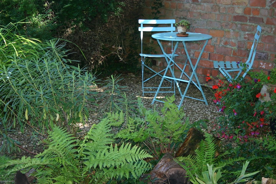 Ferns will often grow in difficult, shady corners in the garden
