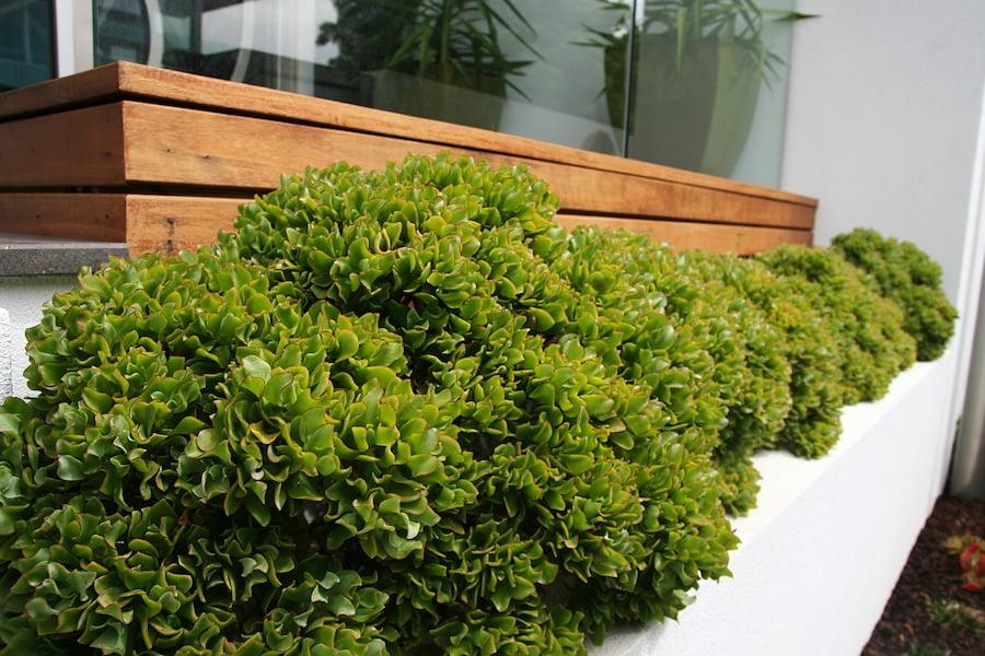 Garden DesignFest 2014 Design Phillip Withers