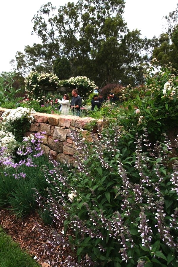 Planting design at The Falls in Euroa