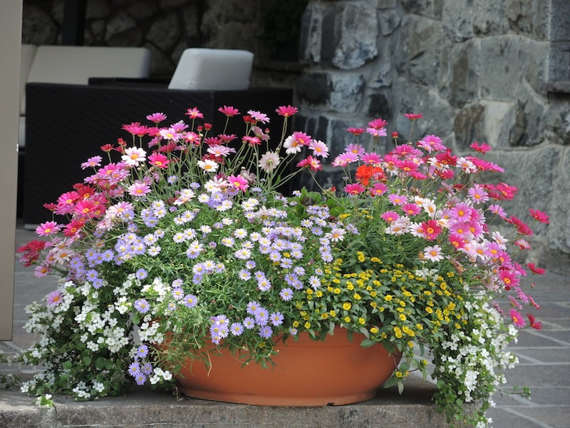 Window Boxes of the Dolomites Photo Helen McKerral01