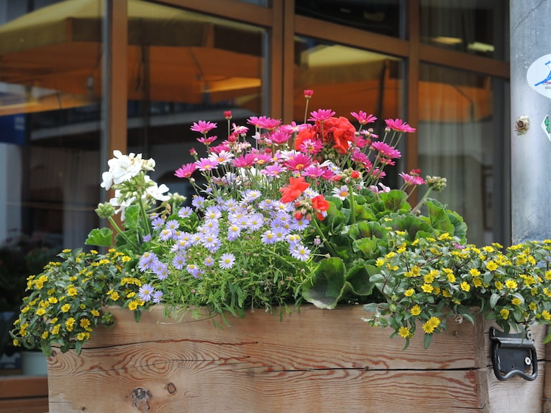 Window Boxes of the Dolomites Photo Helen McKerral02