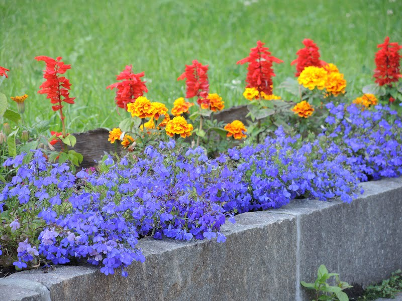 Window Boxes of the Dolomites Photo Helen McKerral12