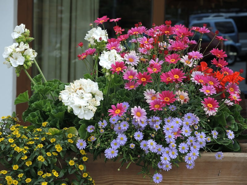 Window Boxes of the Dolomites Photo Helen McKerral14