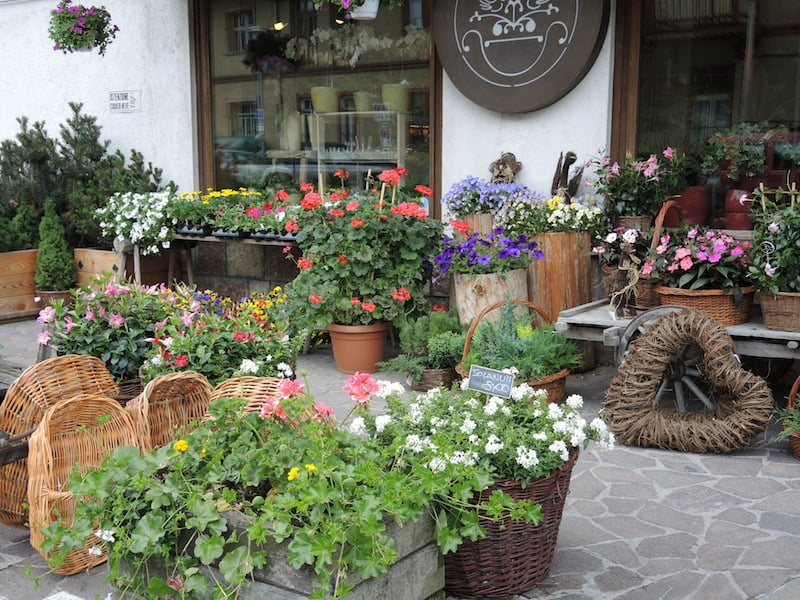 Window Boxes of the Dolomites Photo Helen McKerral15