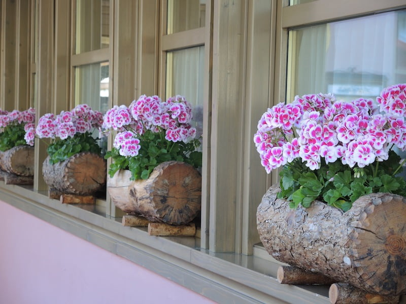 Window Boxes of the Dolomites Photo Helen McKerral30