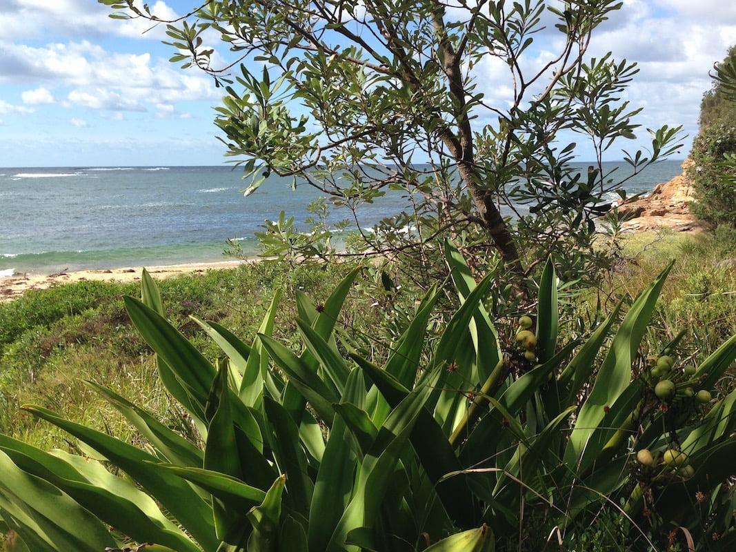 Looking through the Crinum to Maitland Beach. Photo: Janna Schreier