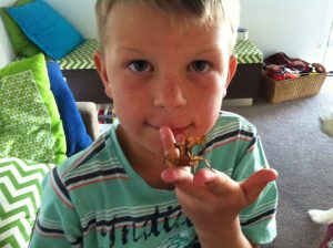 Spiny leaf insects make great pets for kids