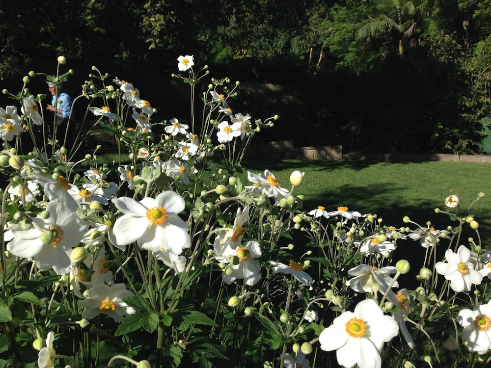 Banksia Design Group's Pymble Garden. Photo: Janna Schreier