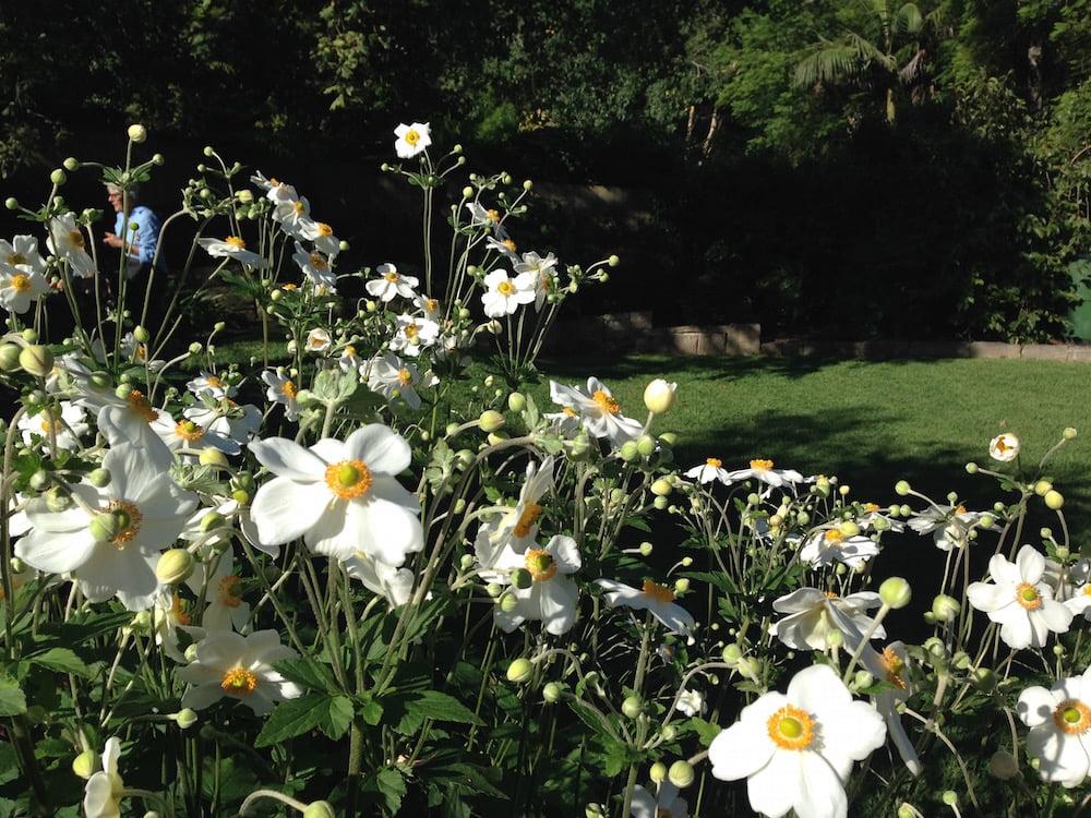 Banksia Design Group's Pymble Garden. Photo: Janna Schreier