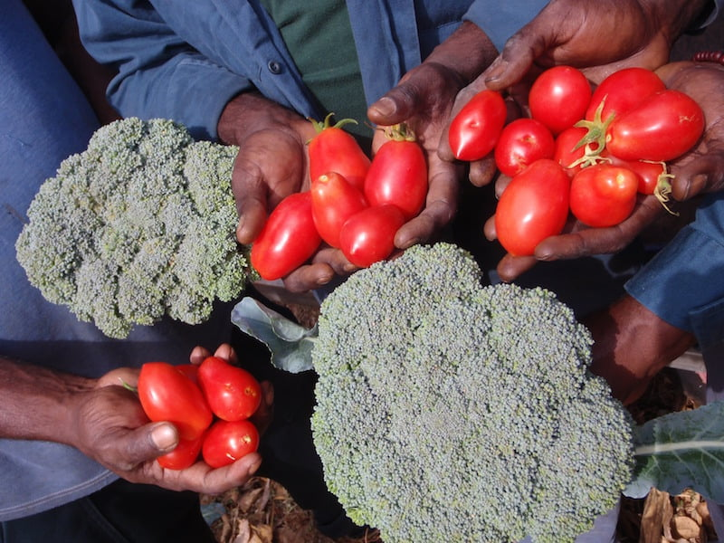 Foodswell - helping remote communities provide their own locally-grown fresh fruit and vegetables