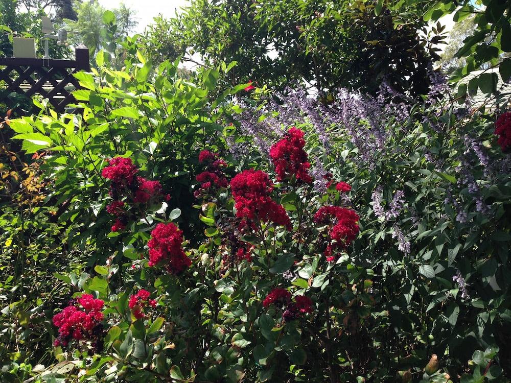 Margery Postlethwaite's Forestville Garden. Photo: Janna Schreier