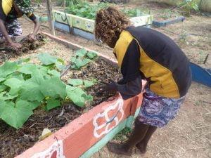Using seaweed in the Milyakburra School garden on Bickerton Island EduGrow 2014
