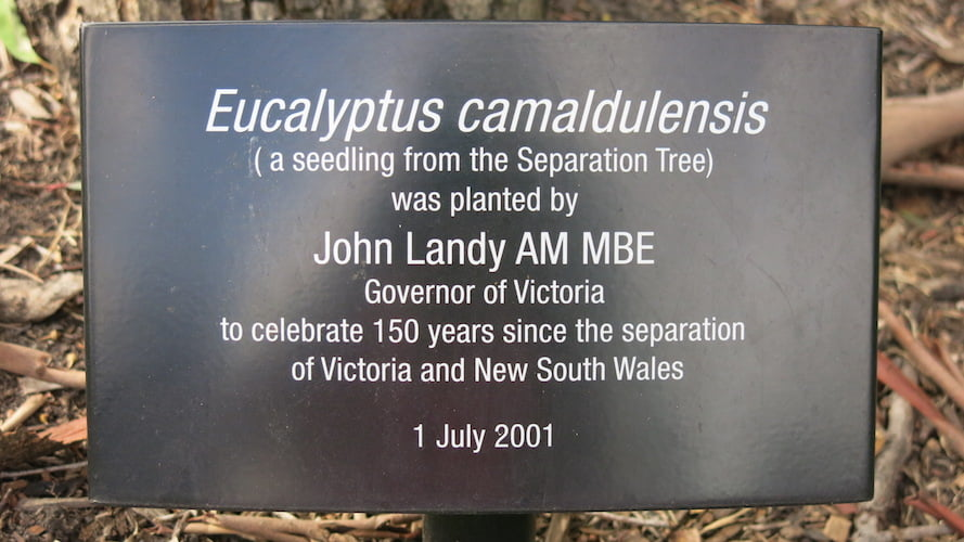 Plaque commemorating planting of the Separation Tree seedling by Governor of Victoria John Landy AM MBE in 2001