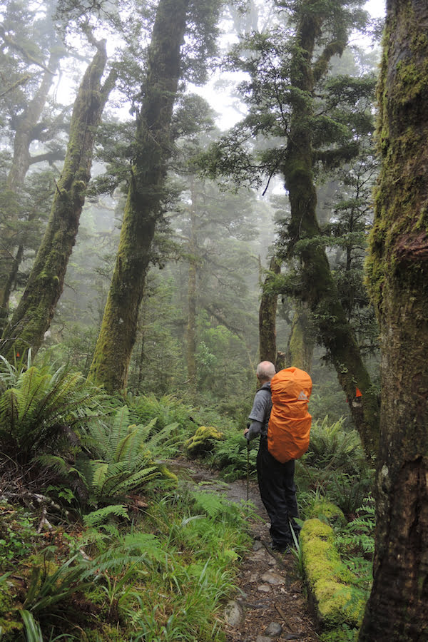 Hiking in New Zealand's giant beech forests