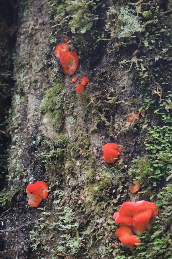 Jelly fungi