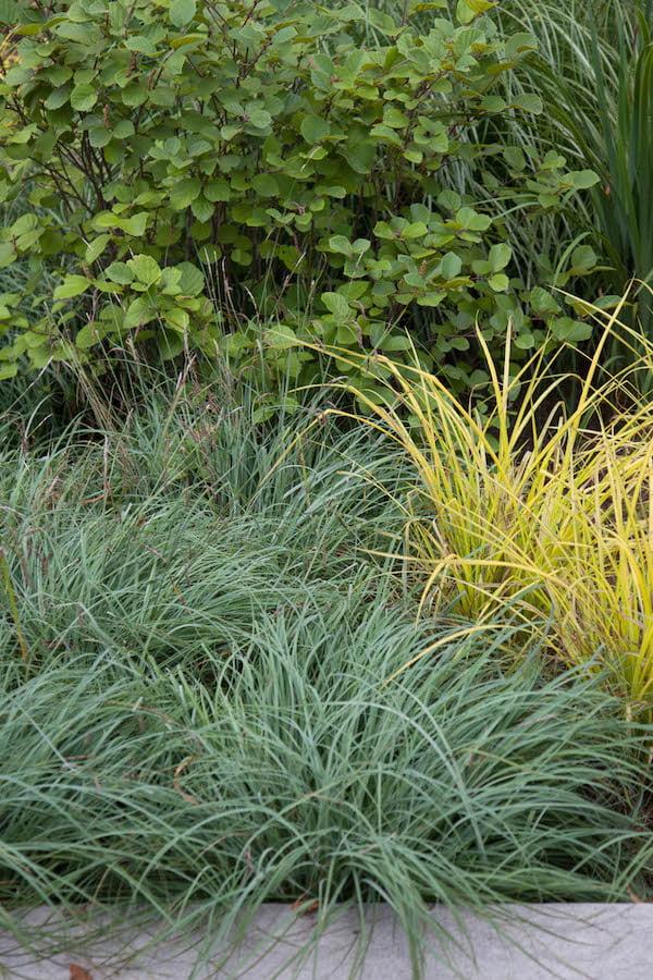 Coastal plantings Matthew Cunningham Landscape Design LLC Longwood garden