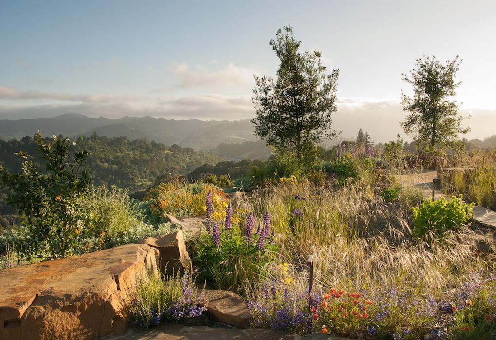 Spectacular views -Reclamation of Native Oak Ridge, Design David Thorne LA, Oakland CA