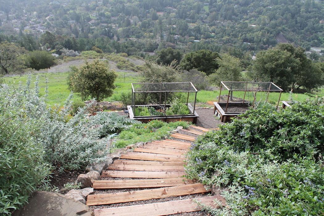 Timber steps to edible garden Reclamation of Native Oak Ridge, Design David Thorne LA, Oakland CA