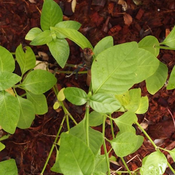 hidden garden stake Image by GardenDrum.com Image by GardenDrum.com