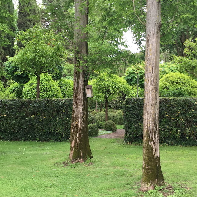 Views in: planting with perspective, La Landriana