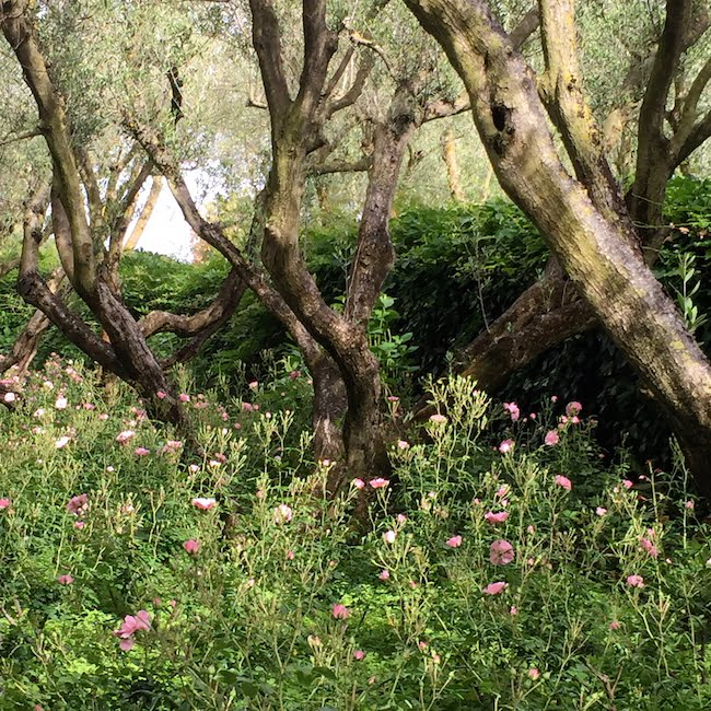 Trees: and set off flowering plants