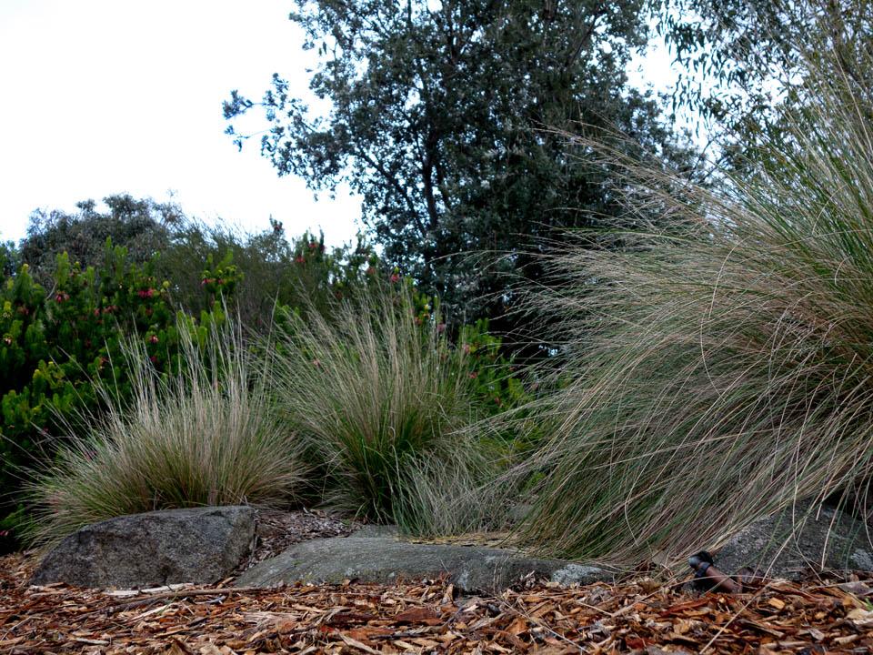 Ellis Stones rock outcrop (Anne Vale)