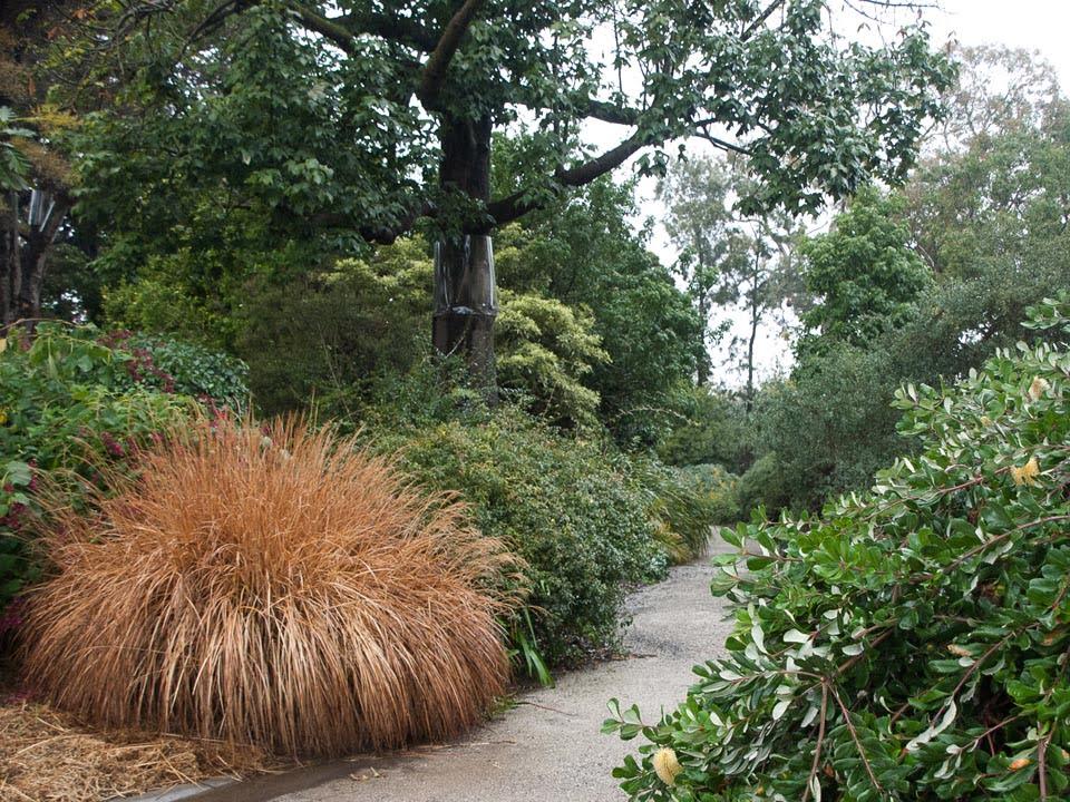 Informal path in the ellis Stones Garden. Photo Anne Vale