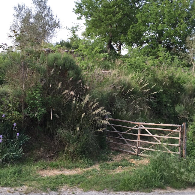 Views in: open planting
