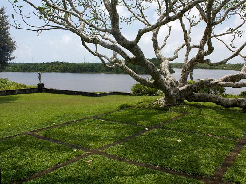 View of the lake at Lunuganga. Photo Fiona Ogilvie