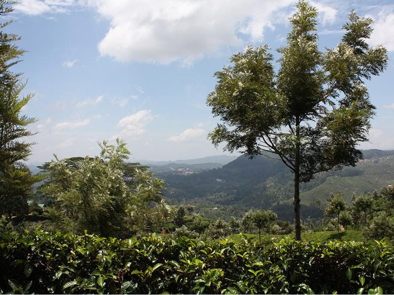 Hill country near Nuwara Eliya. Photo Fiona Ogilvie