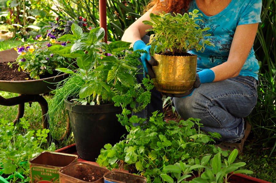 Jane in garden - container gardening (3)