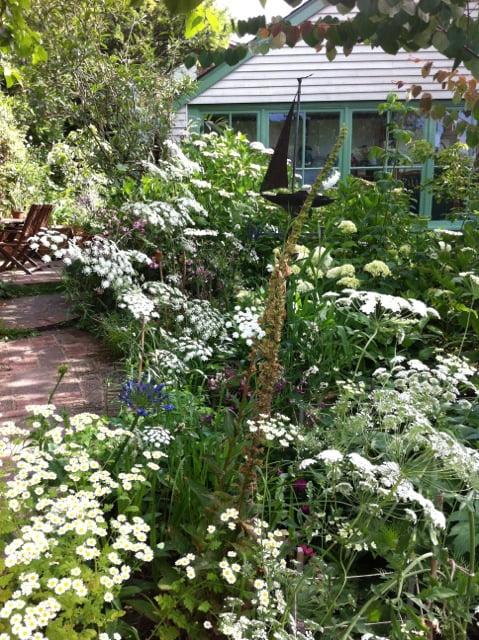 My garden Photo ©Stephanie Donaldson