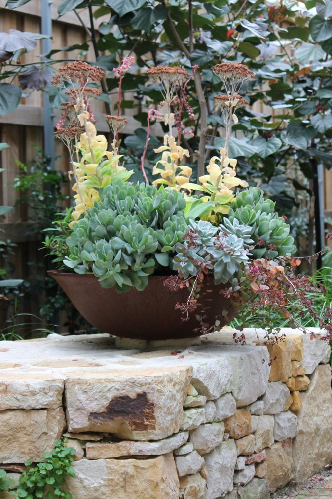 Succulent bowl focal point